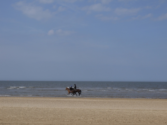 Cantering in the sea, Norfolk