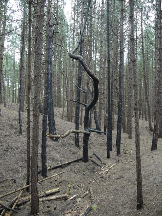 Lightning struck tree, Wells