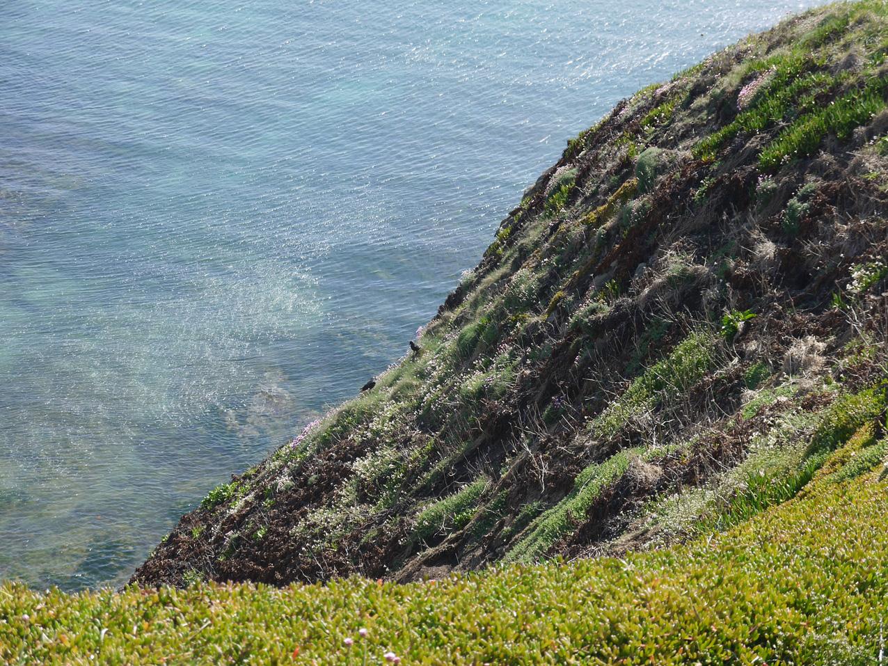 Beautiful Cornish water